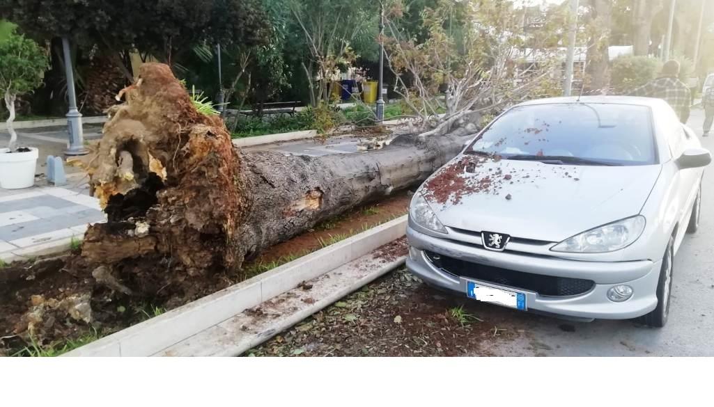 Mazara, rientra l'emergenza maltempo  Interventi nel lungomare per due alberi, uno caduto l'altro pericolante, ed in via della Pace per mettere in sicurezza un palo della luce