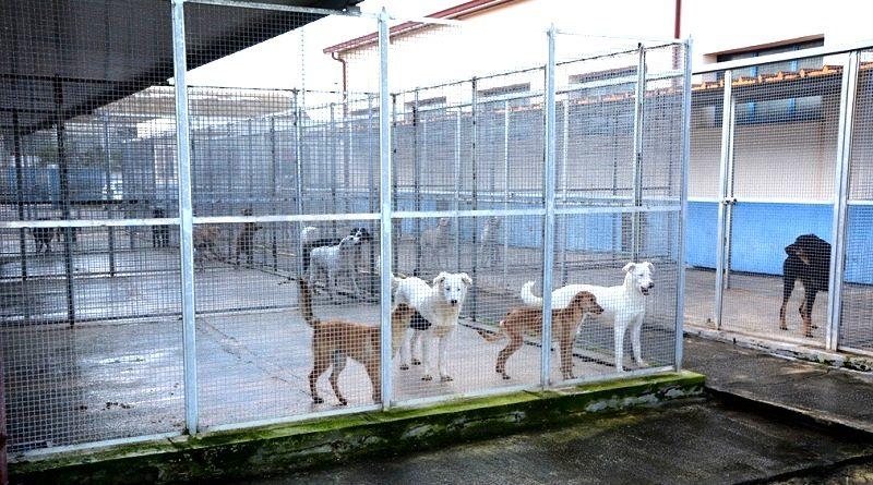 Potenziato l'impianto di allarme del Rifugio Sanitario per cani